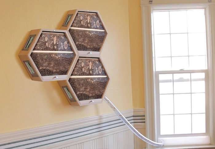 Одна компания придумала, как можно интегрировать пчелиные ульи в ваш домашний интерьер-12 фото + 1 видео-