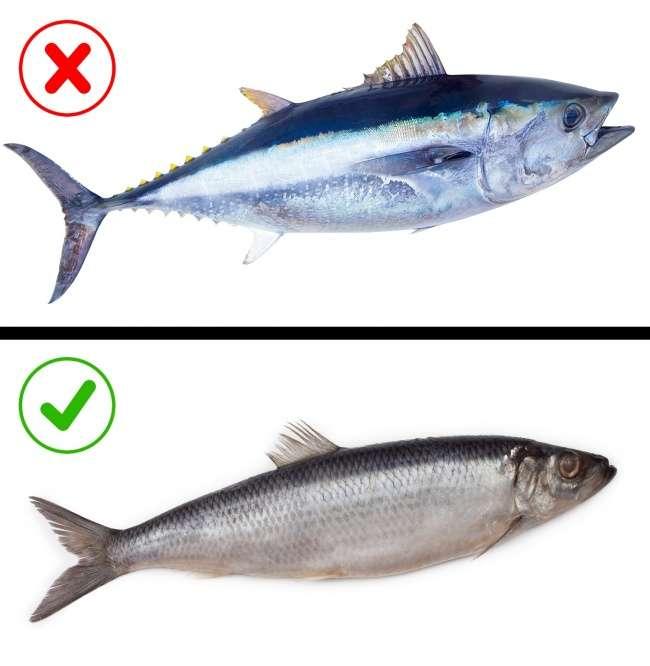 Какую замороженную рыбу нестоит есть: 8советов для выбора полезного продукта