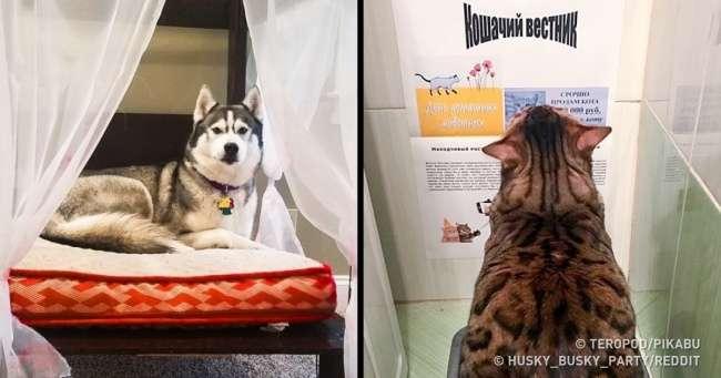 19заботливых людей, которые точно заслуживают право иметь собак икошек