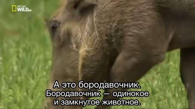 18харизматичных зверей, среди которых наверняка есть ваша родственная душа