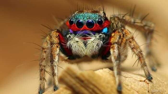 «А кто это у нас такой восьмилапый ползет?» или несколько весьма жутких историй о пауках