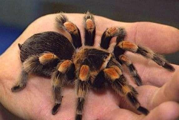 -А кто это у нас такой восьмилапый ползет?- или несколько весьма жутких историй о пауках