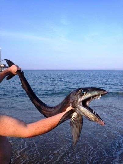 Чудовища, попавшие в рыбацкие сети