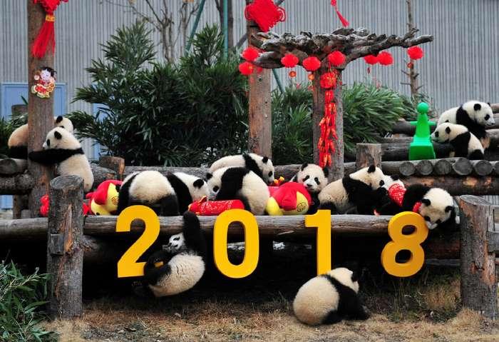 Как в Китае отметили год желтой земляной собаки