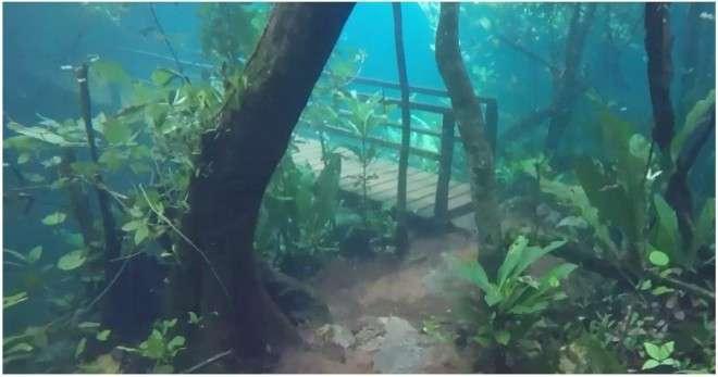 Невероятные подводный лес в Бразилии