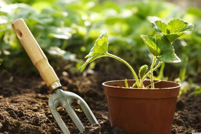 Зачем опытные садоводы помещают спички в горшки с зеленью, и Почему надо поступать так же