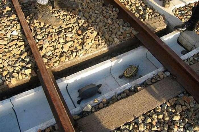 26 живописных экодуков, ежедневно спасающих сотни жизней животных по всему миру