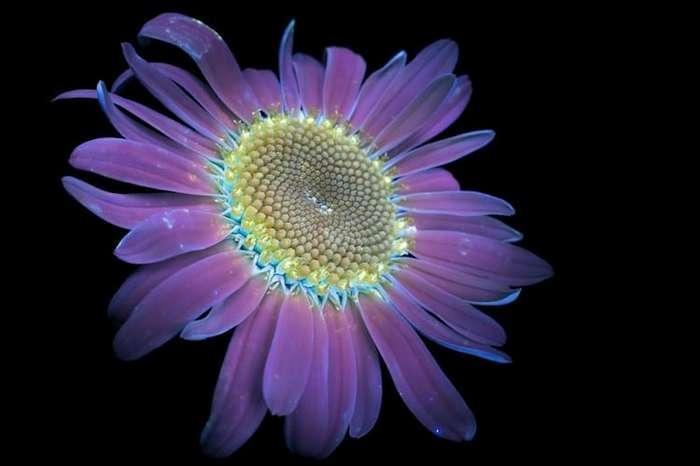Мир глазами пчел от фотографа Craig P. Burrows