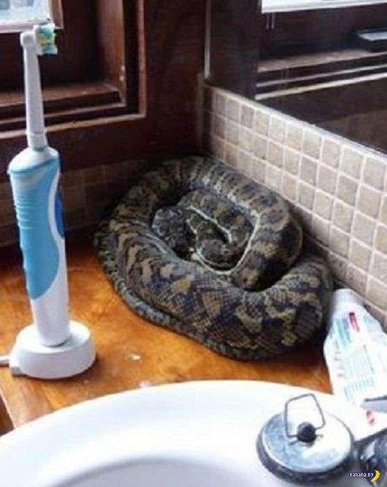 В Австралии много-много змей