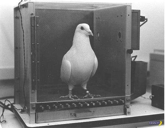 Система наведения -голубь-