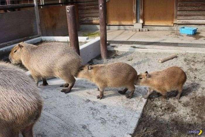 Животные – милые!