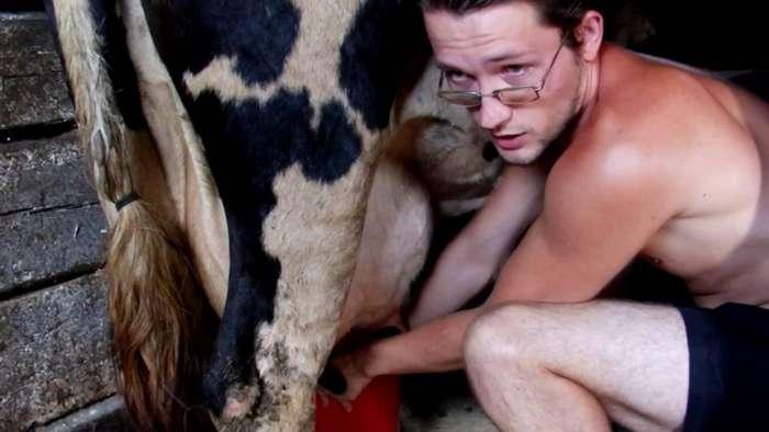 Как я корову доил