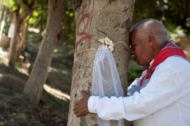 В Мексике одинокие женщины выходят замуж за деревья, чтобы спасти их