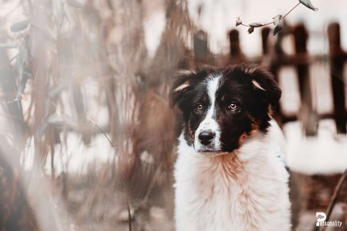 Фотографии брошенных животных, которые ищут свой дом