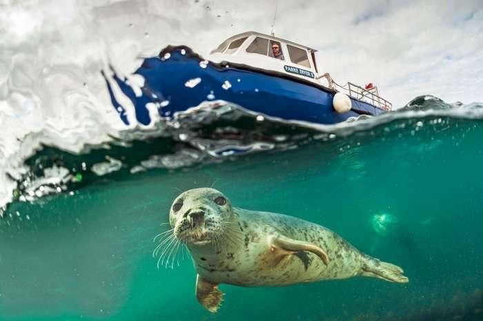 Подводная жизнь: удивительные фотографии животных