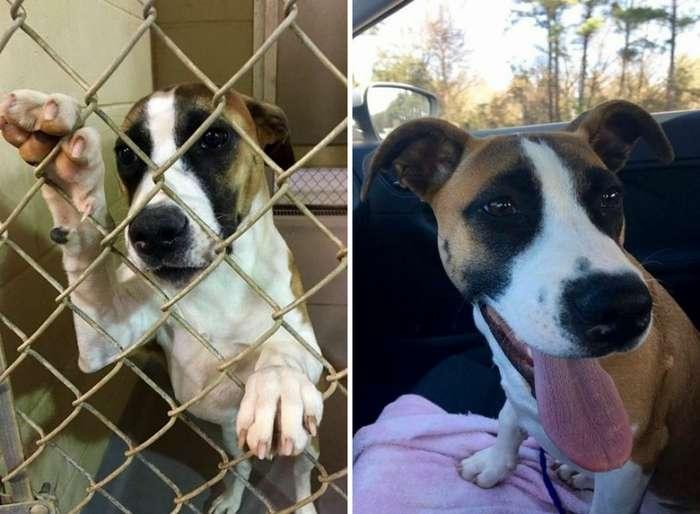 Трогательные фотографии собак до и после спасения, которые растрогают ваши сердца