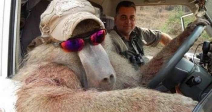 Защитники животных возмущены фотографиями убитых животных