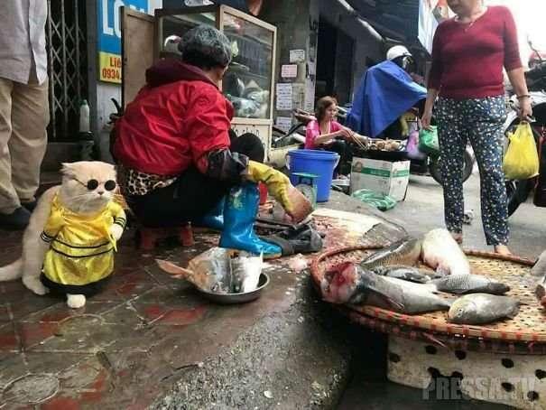 Самый привлекательный продавец рыбы на вьетнамском рынке
