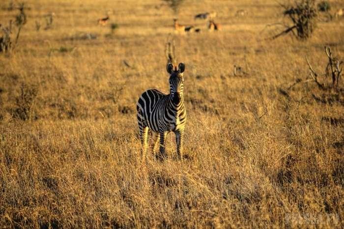 Дикие животные Кении