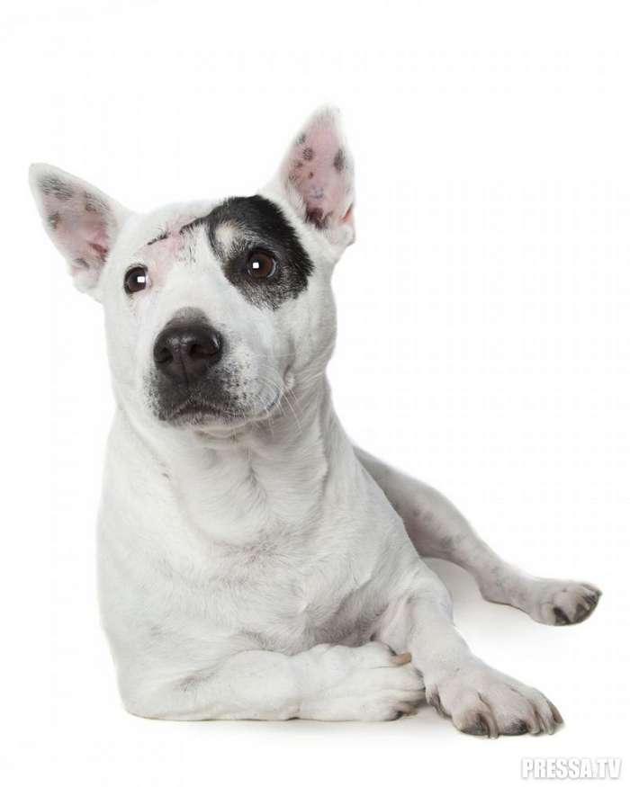 Собаки с ограниченными физическими возможностями