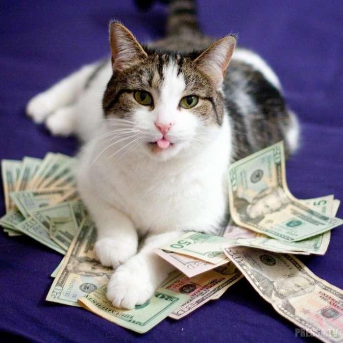 Богатые и пушистые