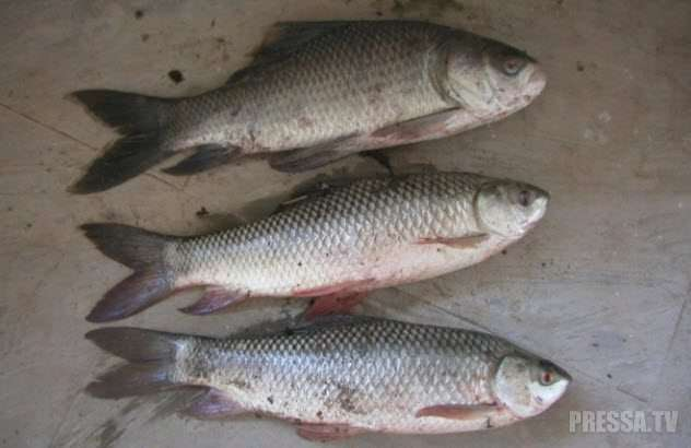 Реальные случаи, когда рыба падала с неба