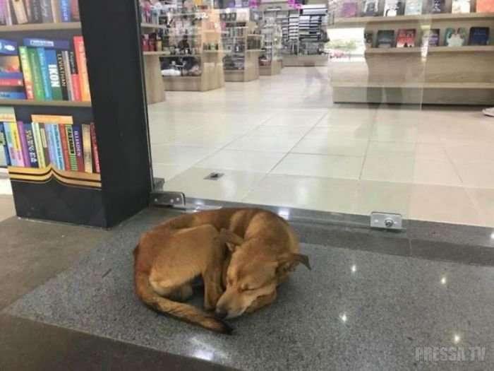 Бродячая собака похитила из книжного магазина книгу и изменила свою жизнь