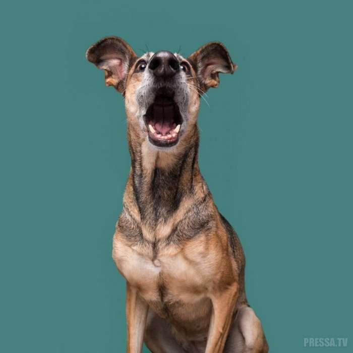 Собаки, как люди, каждая - уникальна!