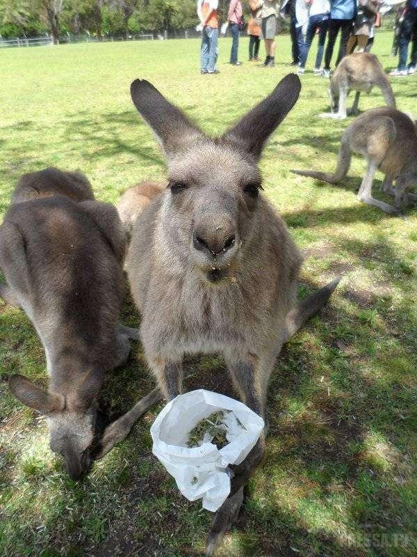 Прикольные фотографии из Австралии
