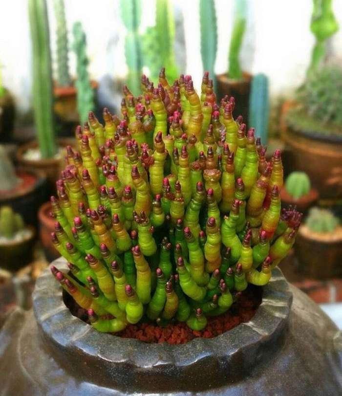 Чудо растения, которые где-то рядом с нами-32 фото-