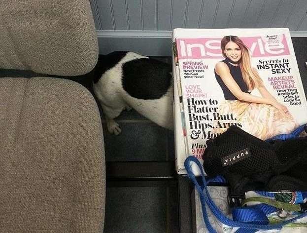 На что только не идут животные, чтобы спрятаться от ветеринара!-13 фото + 2 видео-