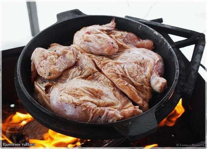 Цыпленок таПака-18 фото-