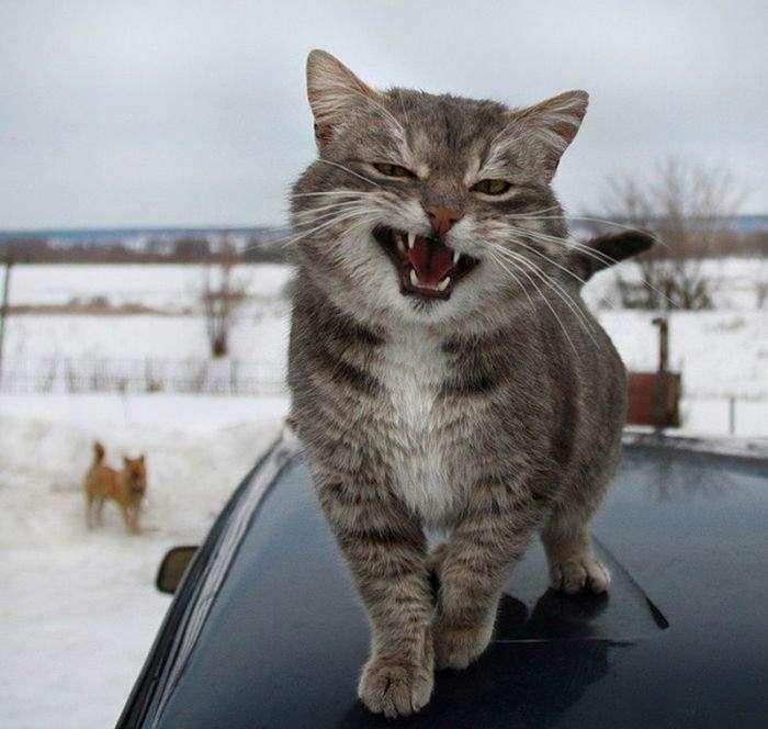 Забавные и милые животные заряжают позитивом (30 фото)