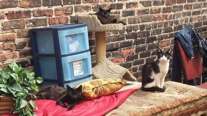 Бездомный оставил после себя сорок уличных кошек. Местные жители построили для них мини-городок (12 фото)
