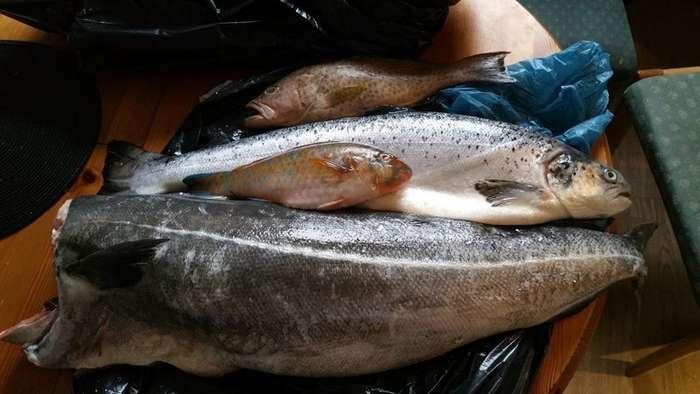 Быстрая -РЫБАЛКА- или не плохо ,когда рядом рыбный рынок-31 фото-