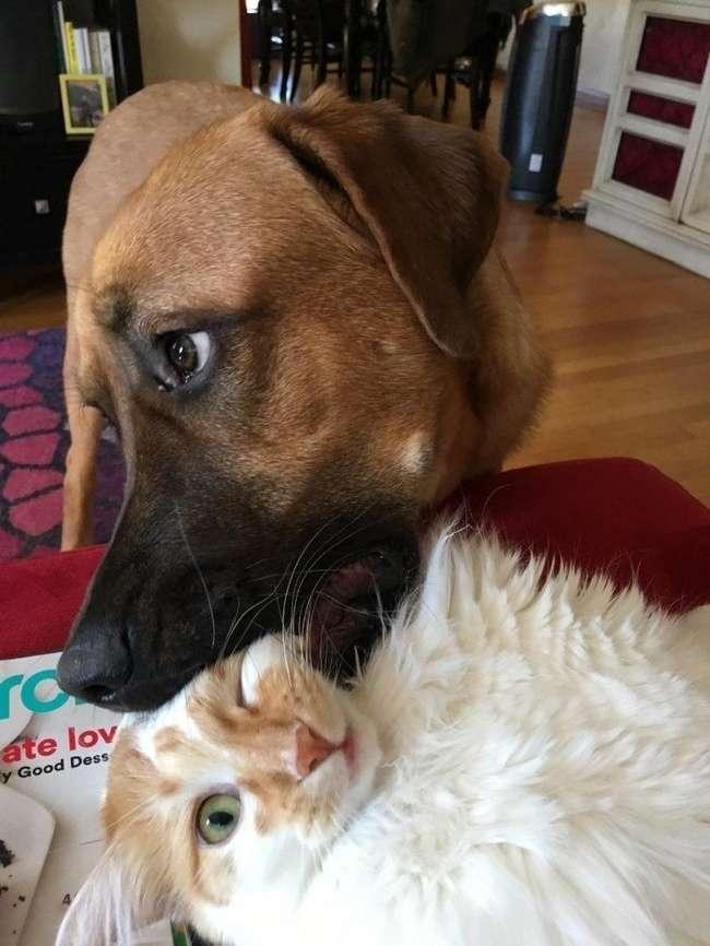 27фотографий кошек исобак, которые заставят вас забыть обо всех проблемах