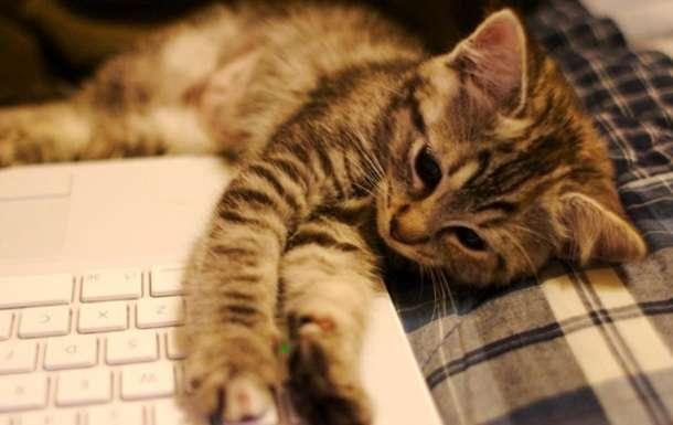 -Котики &8211; это не только ценный мех- или пять причин, почему завести кота жизненно необходимо