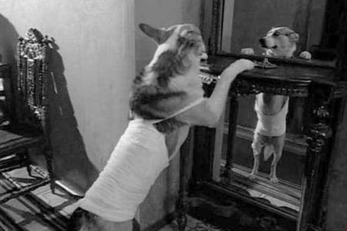 Как снимали фильм -Собачье сердце-