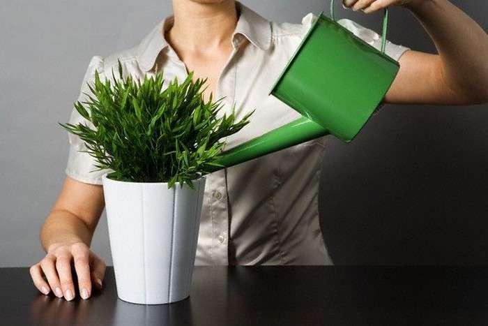 Как сохранить комнатные цветы, уезжая в отпуск
