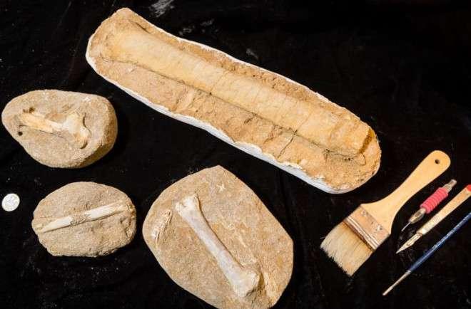 Ученые выяснили, кто был главным на планете 200 млн лет назад