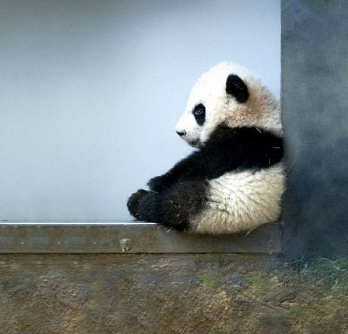 Животные детеныши в фотографиях