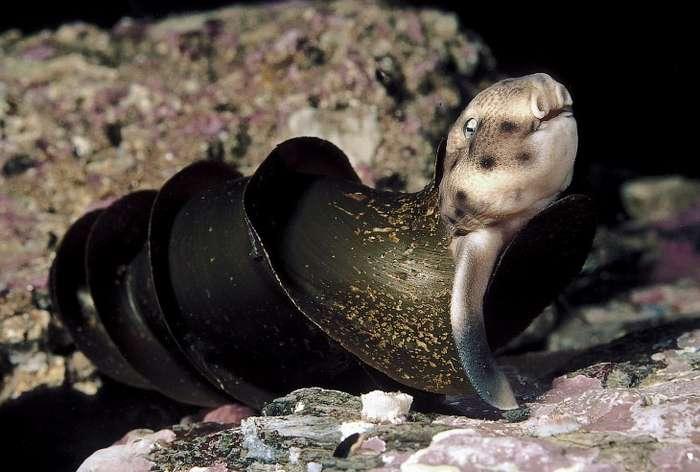 Подводный мир в объективе