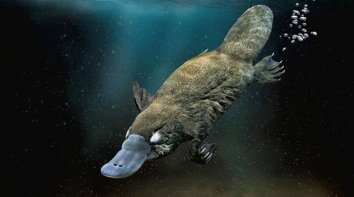 Удивительные подводные создания