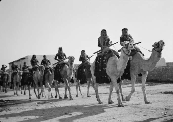 От лошадей до собак и крыс: каких животных люди использовали в борьбе с противником и в военном деле
