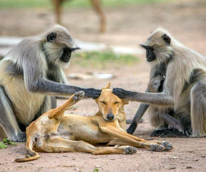 Животные, которые своими повадками заставят хохотать во весь голос любого (19 фото)