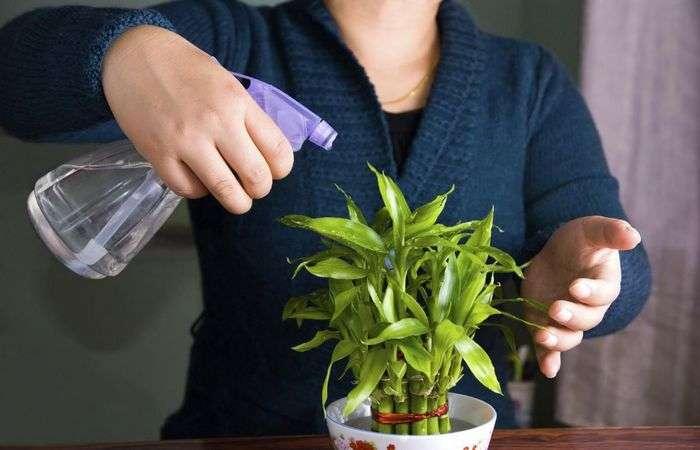 Что делать, когда нужно уехать и некому полить цветы дома: Уловка, с которой не придётся отдавать ключи соседям