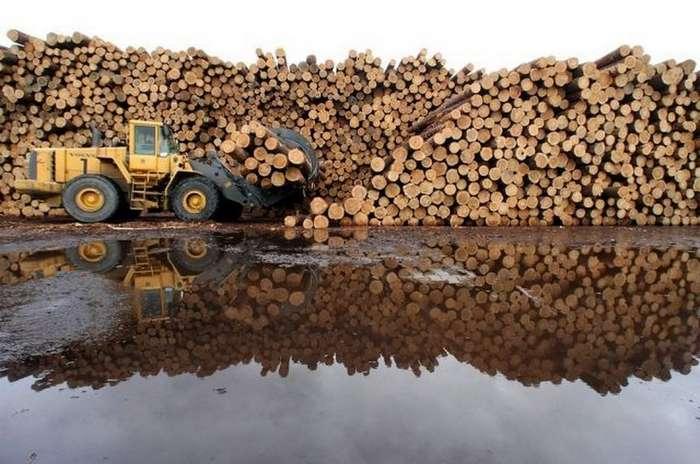 Китайская корпорация Цзинье арендовала в Томской области 137 га леса