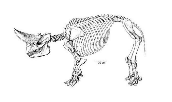 Арсинойтерий: ископаемое существо с фантастическим черепом