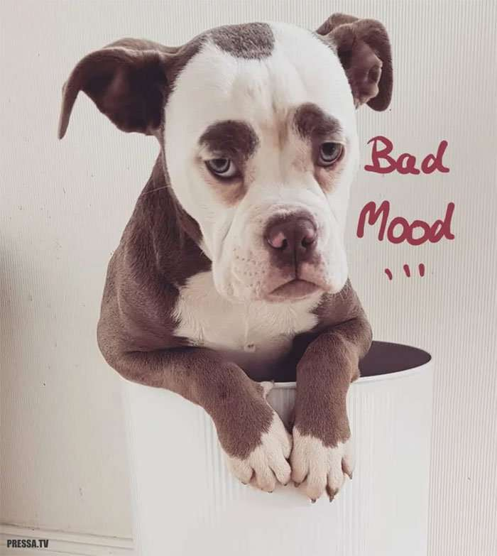 Самая грустная собака - Мадам Брови