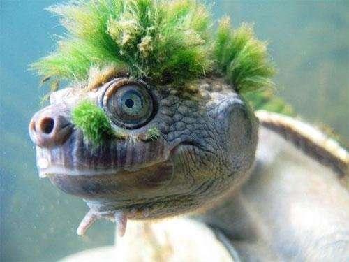 Панк-Рок-Черепаха-12 фото + 1 видео-